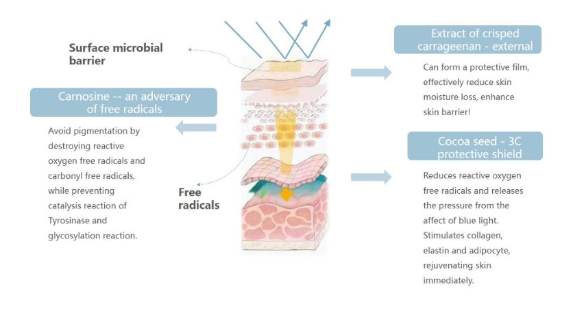 NOX BELLCOW-Cosmetics Manufacturer-what Sunburn Remedies Actually Work